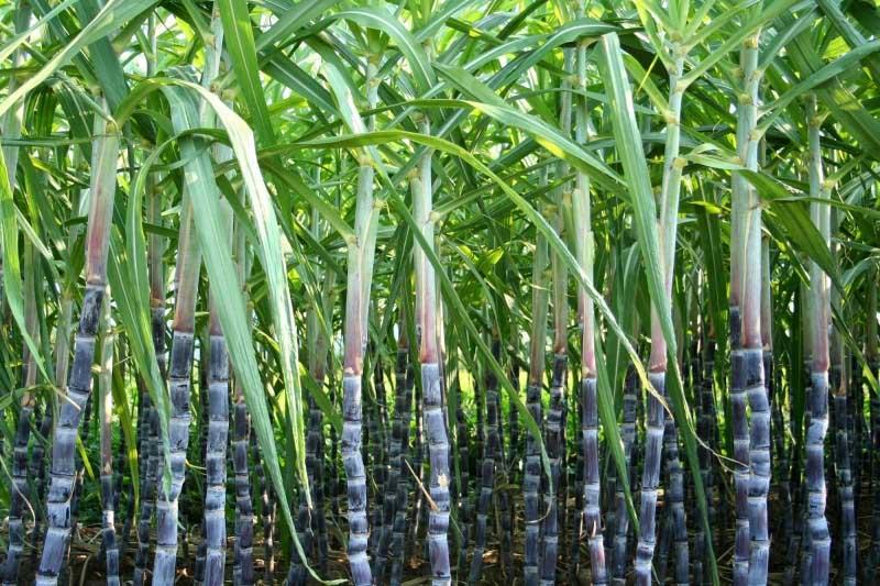 普立万的reSound OM生物衍生TPEs拥有40%~50%的源自甘蔗的生物可再生成分-PRA Chinese